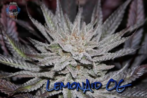 LemonAid OG