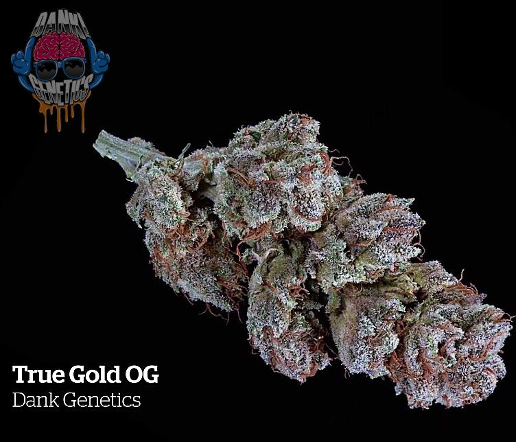 True Gold OG